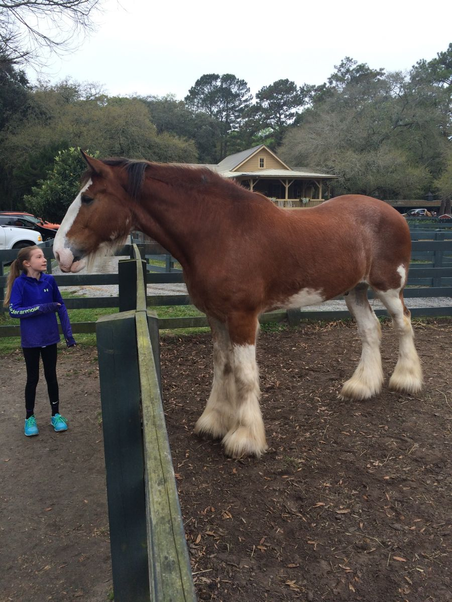 Olivia and her new Clydesdale friend